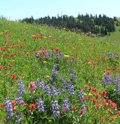 Hiking Alpine Meadows