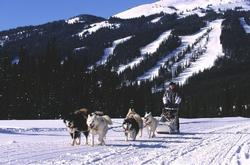 There is even dog sledding at Sun Peaks