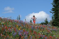 Hiking in the alpine blossoms in August. Spectacular!