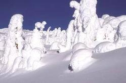 Snow Ghosts Big White Ski Resort, BC, Canada /