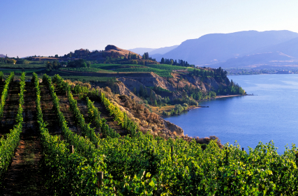 Penticton BC - vineyards by the lake